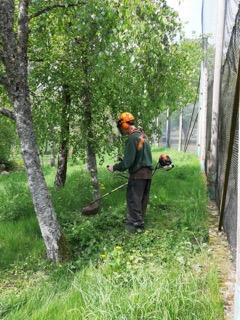 Skånes djurpark klippa gräs