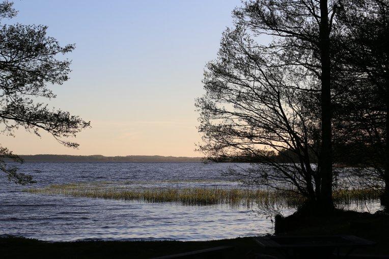 Foto: Kvällssol över Ringsjön med träd i förgrunden